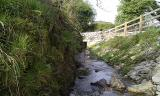 Stream banks softened by new growth